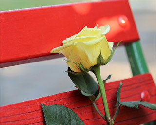 Lissone - panchina rossa