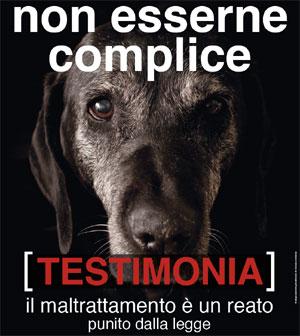 particolare Volantino Enpa - Campagna contro l'abbandono e maltrattamento animali