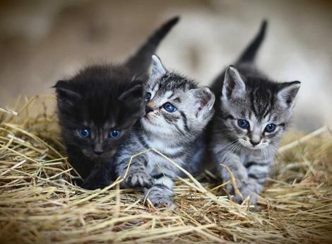 Immagine gatti neonati
