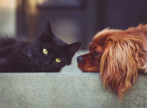 Immagine gatto con cane