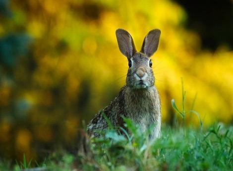 foto coniglio