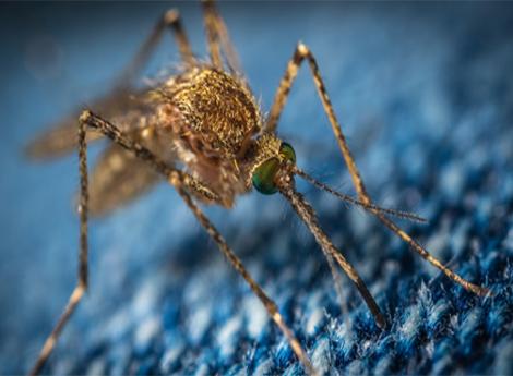 Ordinanza prevenzione e controllo delle malattie trasmesse da insetti vettori e zanzara tigre