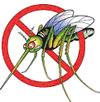 immagine zanzara