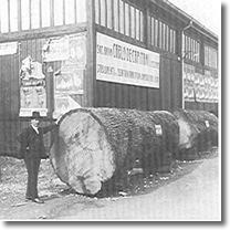 Foto d'epoca con tronchi