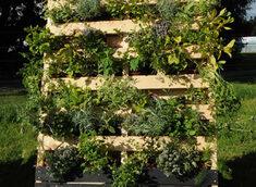 Immagine piante nell'orto verticale